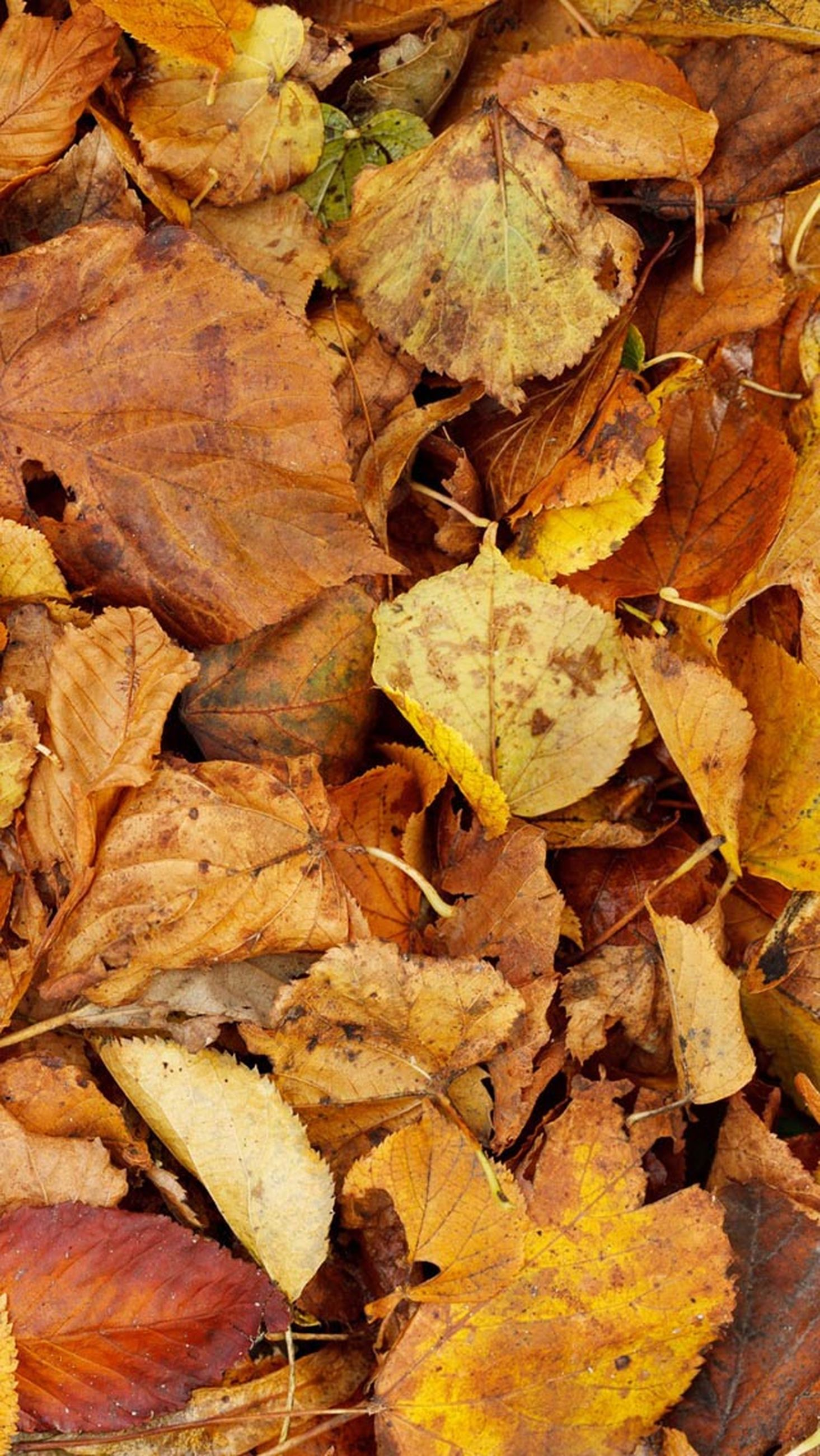 autumn, leaf, full frame, change, backgrounds, dry, leaves, season, abundance, high angle view, close-up, natural pattern, yellow, fallen, nature, brown, no people, day, textured, natural condition