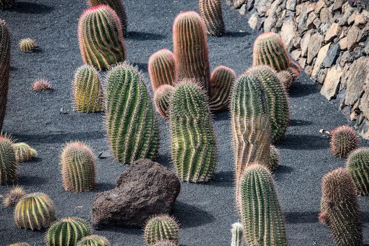 Succulent plants growing outdoors