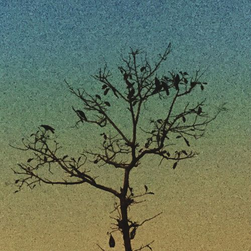 Picoftheday Photographer EyeEm Best Shots EyeEm Nature Lover EyeEmBestPics Travel Travel Photography Village Followme Follow4follow Sandy06photography Nature 8MP Iphone6 IPhoneography Dakshinakannada Mangalore Karnataka Birds Crow Bats Devil Creapy Tree Dark