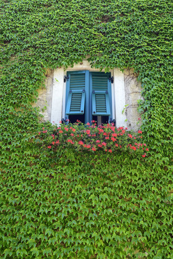 Alto Adige Architecture Beauty In Nature Building Exterior Built Structure Day Flower Freshness Grass Green Color Growth House Italy Ivy Leaves Nature No People Outdoors Plant South Tyrol Termeno - Tramin Tirol  Trentino Alto Adige Western Europe Window