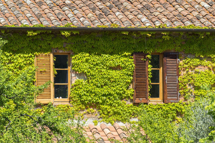 Cottage with ivy growing on walls Cottage House Window Ivy Architecture Building Exterior Building No People Green Color Day Nature Growth Roof Tile Outdoors Sunlight Wall - Building Feature Shutters Home Covering Summer Plant Italy Rustic Rural Scene Green