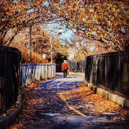 Bay Ridge Fall. 🍂 Park Garden Nature Seasons Fall Autumn Path Trees Man No Face Unrecognizable Person Walking Sunny Day City Cityscape Colors Fall Colors Bay Ridge Brooklyn New York New York City NYC USA