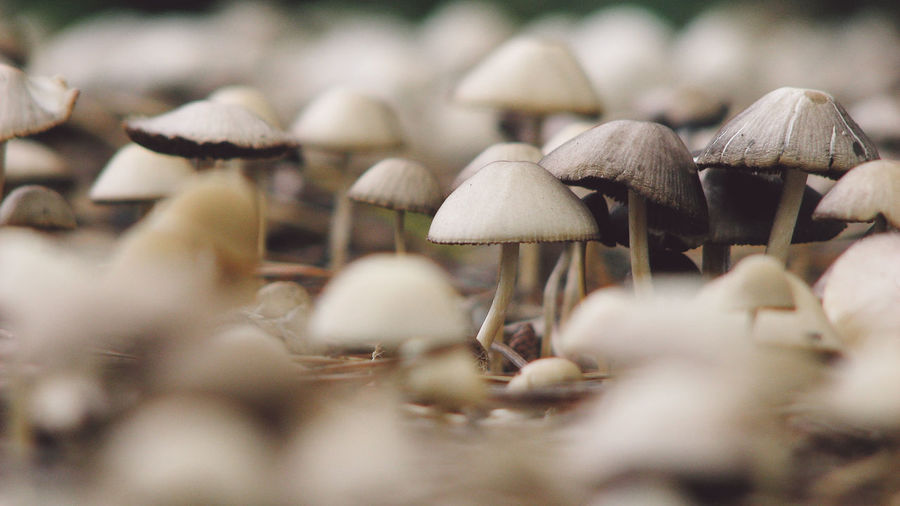 Close-up of mushrooms growing in forest