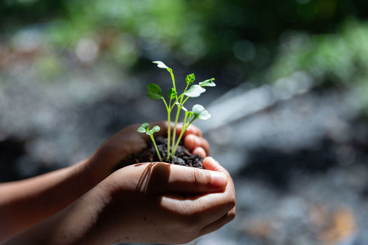 Cropped hands of person holding sapling