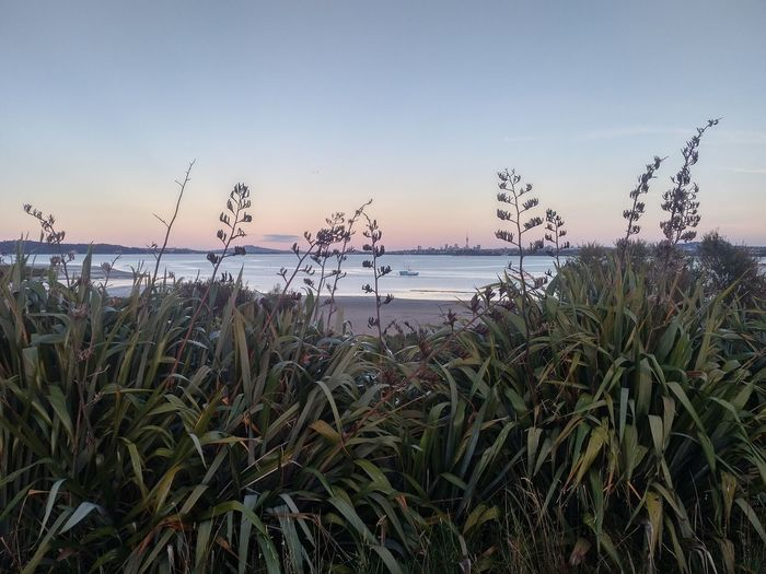 Nature Sky Outdoors Sunset Plant Grass Tranquility Auckland New Zealand