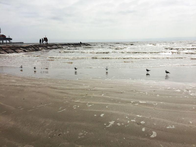 EyeEm Selects Seagulls Beach GalvestonTexas Water Birds Sand Beauty In Nature Sky Horizon Over Water Outdoors Wave