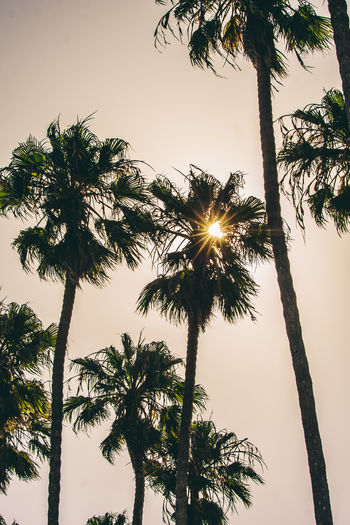 Tropical Beauty In Nature Bright Coconut Palm Tree Growth Lens Flare Low Angle View Nature No People Outdoors Palm Leaf Palm Tree Plant Silhouette Sky Sun Sunlight Sunset Tall - High Tranquil Scene Tranquility Tree Tree Trunk Tropical Climate Tropical Tree Trunk