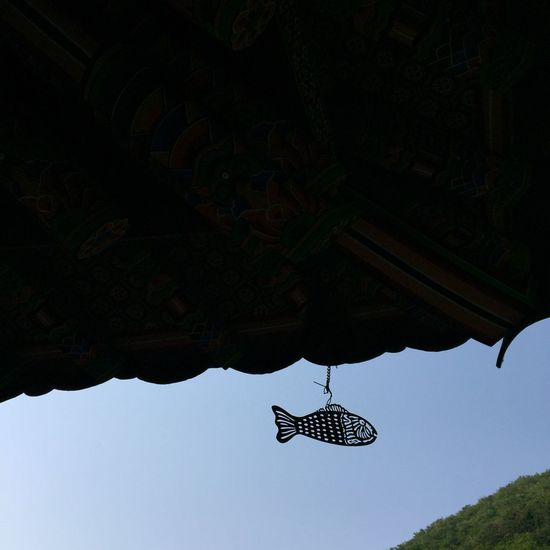 Outdoors Hanging Beauty In Nature Clear Sky Sky Buddhist Temple Wind Chime Wind-bell Photo Fish Jeongseon, Korea