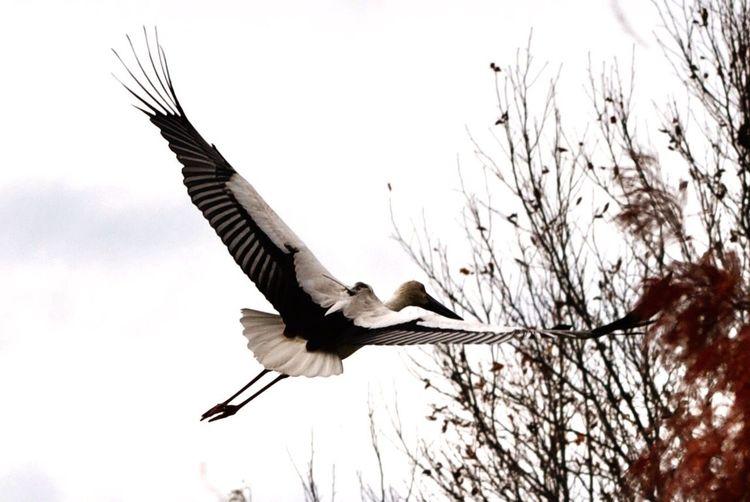 stork fortune