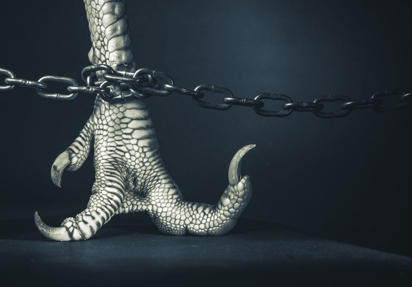 In Chains Animal Chain Claw Close-up Dragon Foot No People Nobody Offensive Part Of Poultry Reptile Shocking Skin Toe Nail