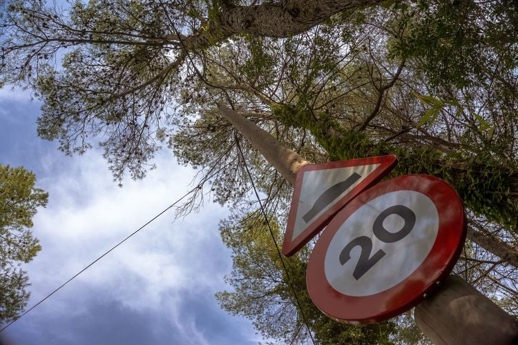 Nature Outdoors Light And Shadow Tree Plant Communication Sign Branch Low Angle View Day Road Sign No People Number Guidance Growth Road Prespective Sky Cloud - Sky Warning Sign Symbol Shape Cherry Blossom Capture Tomorrow