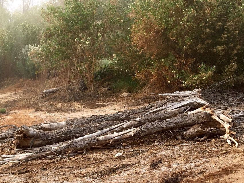 Just a cool old log next to the swamp, kinda cool looking✨ Me Alone On A Walk Foggy Landscape Peaceful View Swamp IPhone Photography Having Fun Beauty In Nature Land Nature Tree Plant No People Tranquility Outdoors Non-urban Scene Road Scenics - Nature