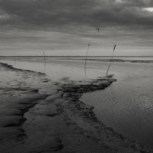 Wadden Sea in
