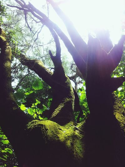 strong and ancient Old Tree . anyone ever stop their steps to take a look at it?