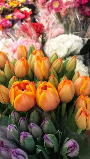 Tulips at the