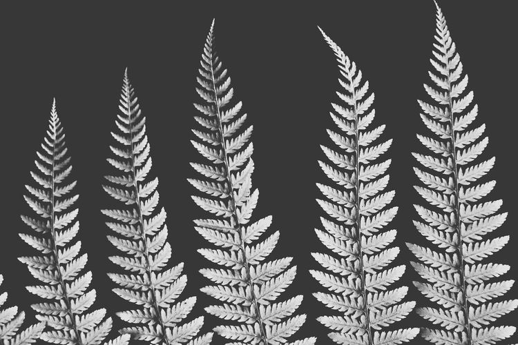 Fern Blackandwhite Worldwide Photography Enjoying Life Minimal Popular Photos Macro Hello World Nature Photography Flowers Tokyo South Korea United States United Kingdom Brazil Hi! Japan Photography Argentina Photography Germany Australia EyeEm Best Shots Photoshoot Europe Trip Artphoto Pmg_tok