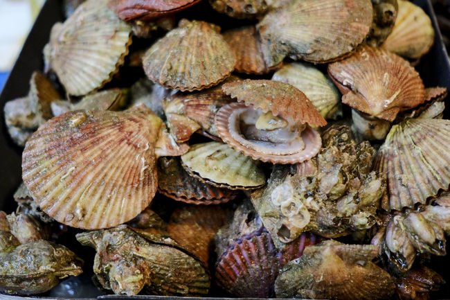 fresh scallops Food Fresh Scallops Freshness S Scallops Scallops Dish Scallops Seafoodporn Seafood Market SeafoodLover Seafoods