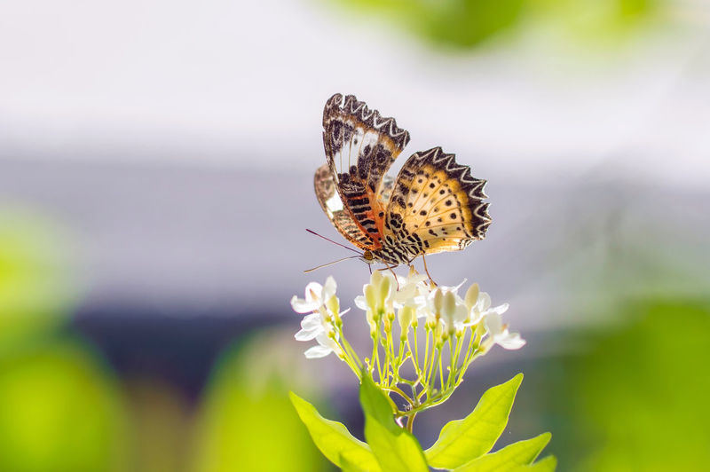 Butterfly in