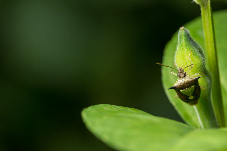 Hemiptera close-up photo on a branch Animal Themes Animal Wildlife Animals In The Wild Close-up Day Green Color Insect Leaf Nature No People One Animal Outdoors Plant