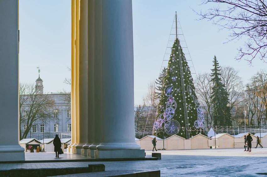 Cathedral square Capture Tomorrow Europe Nikon Nikon Z7 Z7 Capital Vilnius Cathedral Square Tree Architecture Plant Built Structure Building Exterior Nature Sky Building Day Tower Travel Destinations Religion Outdoors City Tall - High Spirituality History The Past Architectural Column