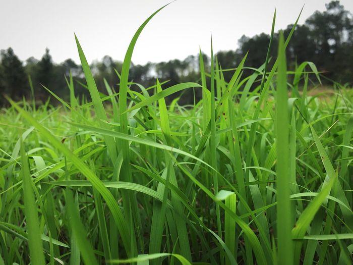 草 自然 青色 绿色 沼泽 湿地