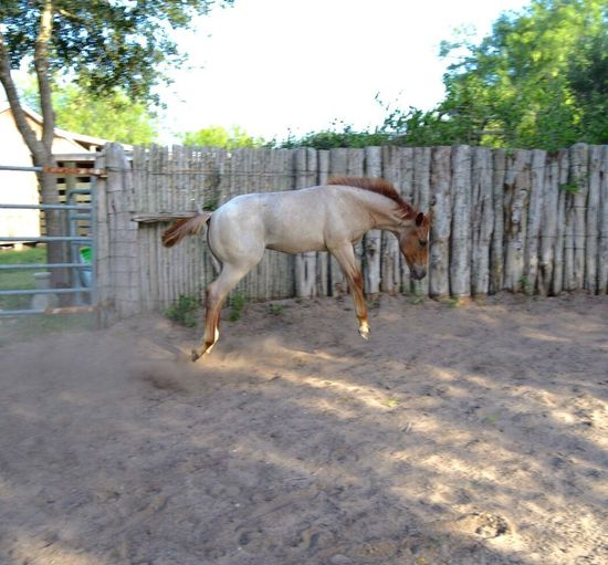 Equine Horse