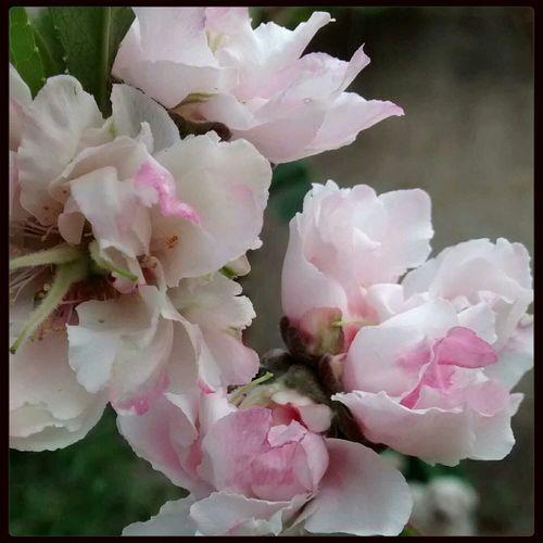 flor de durazno First Eyeem Photo