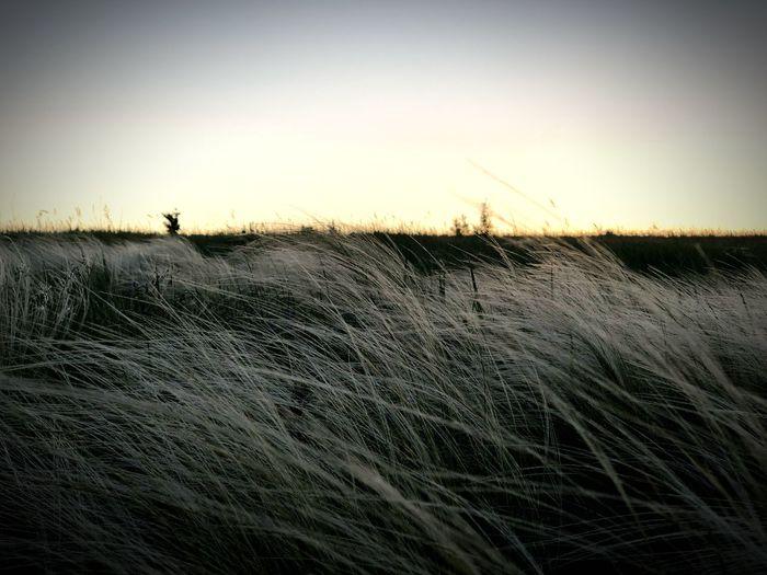 Трава.. Закат