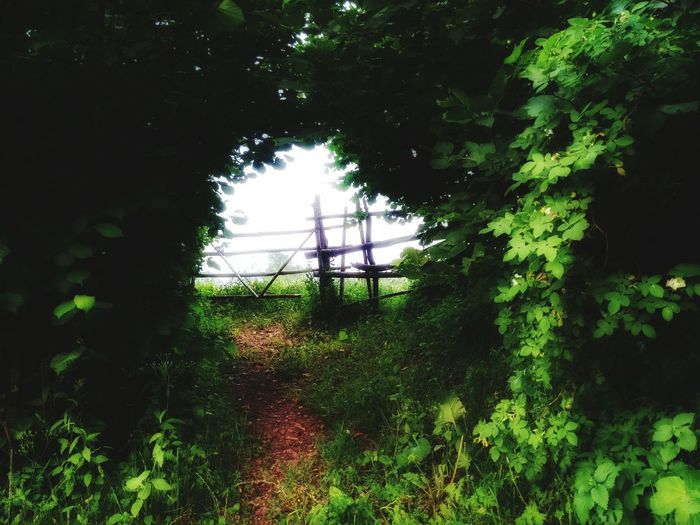 Heavens Door Taking Photos Trees Hdr Edit The Great Outdoors - 2015 EyeEm Awards Nature Photography Nature_collection Nature