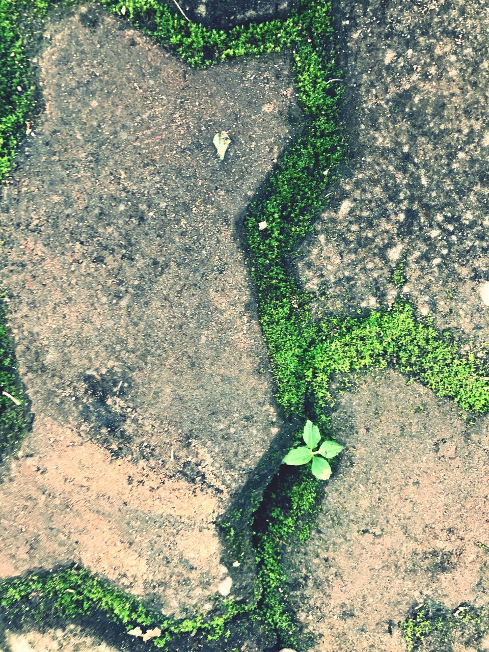 growth, high angle view, green color, plant, green, leaf, no people, day, nature, outdoors, grass, close-up, fragility, freshness