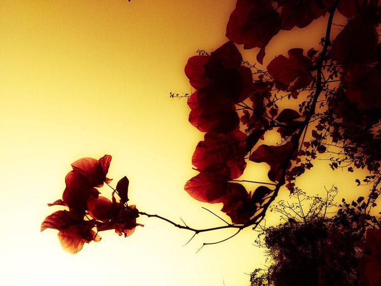 ShubhamTanmayPhotography India Flowers Red Golden Sky Colour
