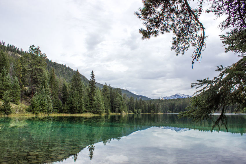 Beauty In Nature Blue Cloud - Sky Day Forest Green Growth Jasper Jasper National Park Lake Landscape Nature No People Non-urban Scene Outdoors Reflection Scenics Sky Tranquility Tree Water