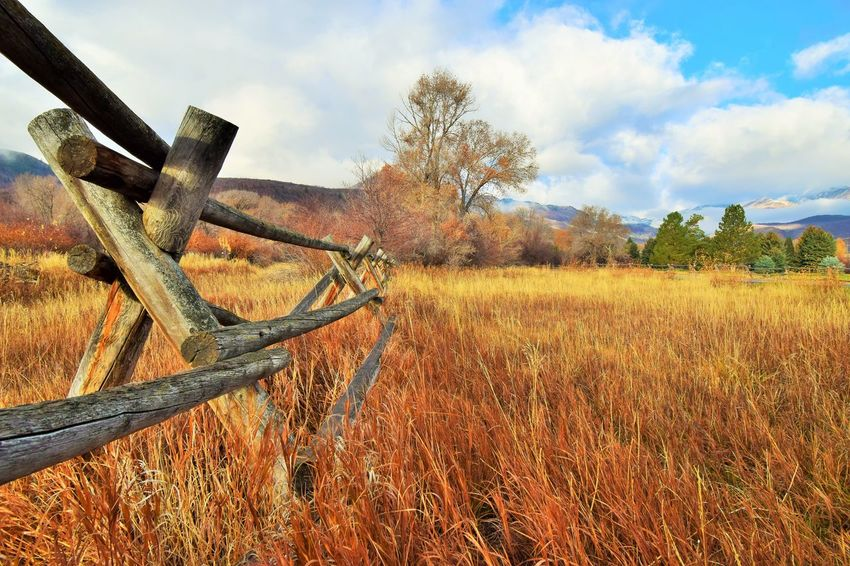 Land Sky Field Plant Nature Tree Landscape Cloud - Sky Environment No People Grass Non-urban Scene Day Tranquility Tranquil Scene Scenics - Nature Outdoors Beauty In Nature Metal Rusty Split Rail Fence