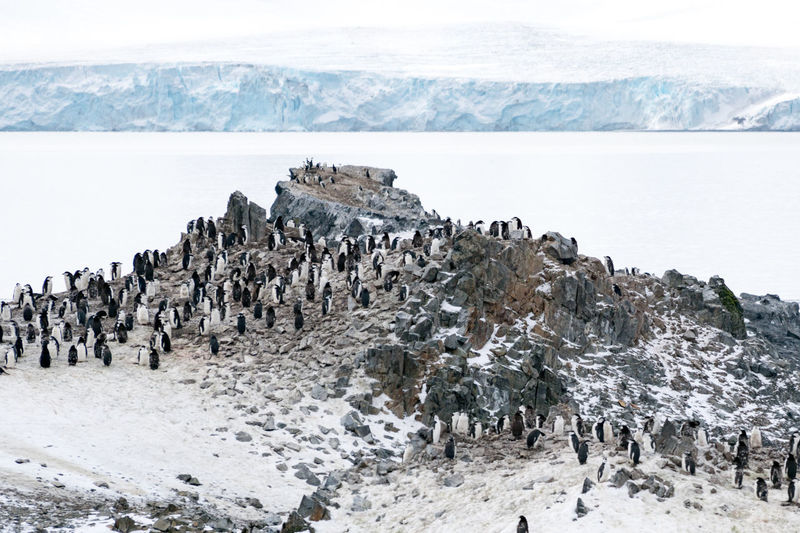 Scenic View Of Penguins Against Sky