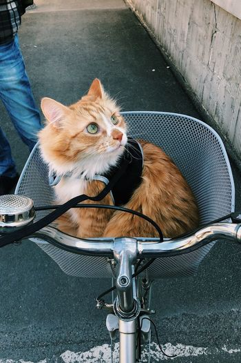 High angle view of cat sitting in bicycle basket on road