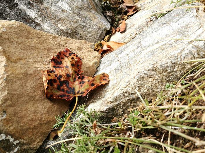 EyeEm Selects Nature Leaf Foglia Stranezza Di Colore Particular Leaf Beautiful Stranger in una giornata ventosa, si posò ai miei piedi una foglia, ne restai incantata per la stranezza dei suoi colori....