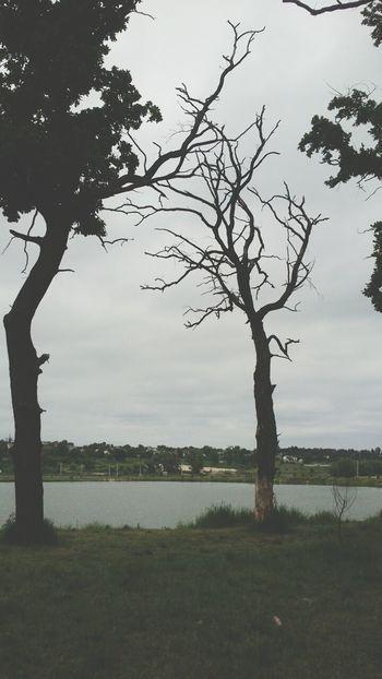 Nature Threes Lake