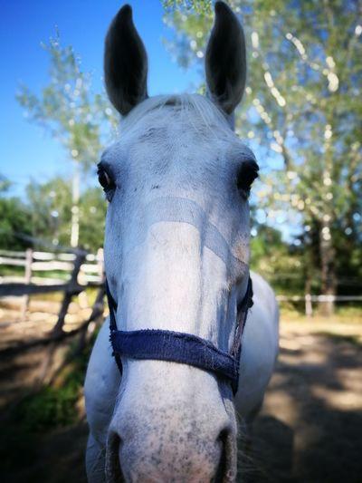 Horse Horse Friends Horse Riding Horseback Riding Sky Close-up Ranch Horse