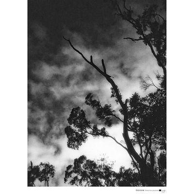【 黑白的情緒 】 天色霧濛 細雨綿綿 勾勒出一幅 黑白的情緒 手機攝影 G4 Tree 365Snap