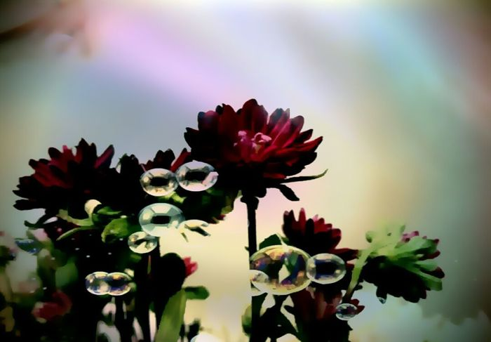 Lighter Selective Focus Standing Tall Red Flower Home Is Where The Art Is Flower Head Edited My Way Bunch Of Flowers Bubbly Bubbles