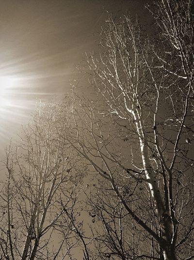 Colorado TreePorn Hugging A Tree Loving Life! Blackandwhite Eye4photography  EyeEm Best Shots EyeEm Best Edits