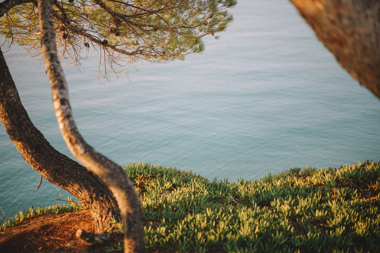 Scenic View Of Sea By Trees
