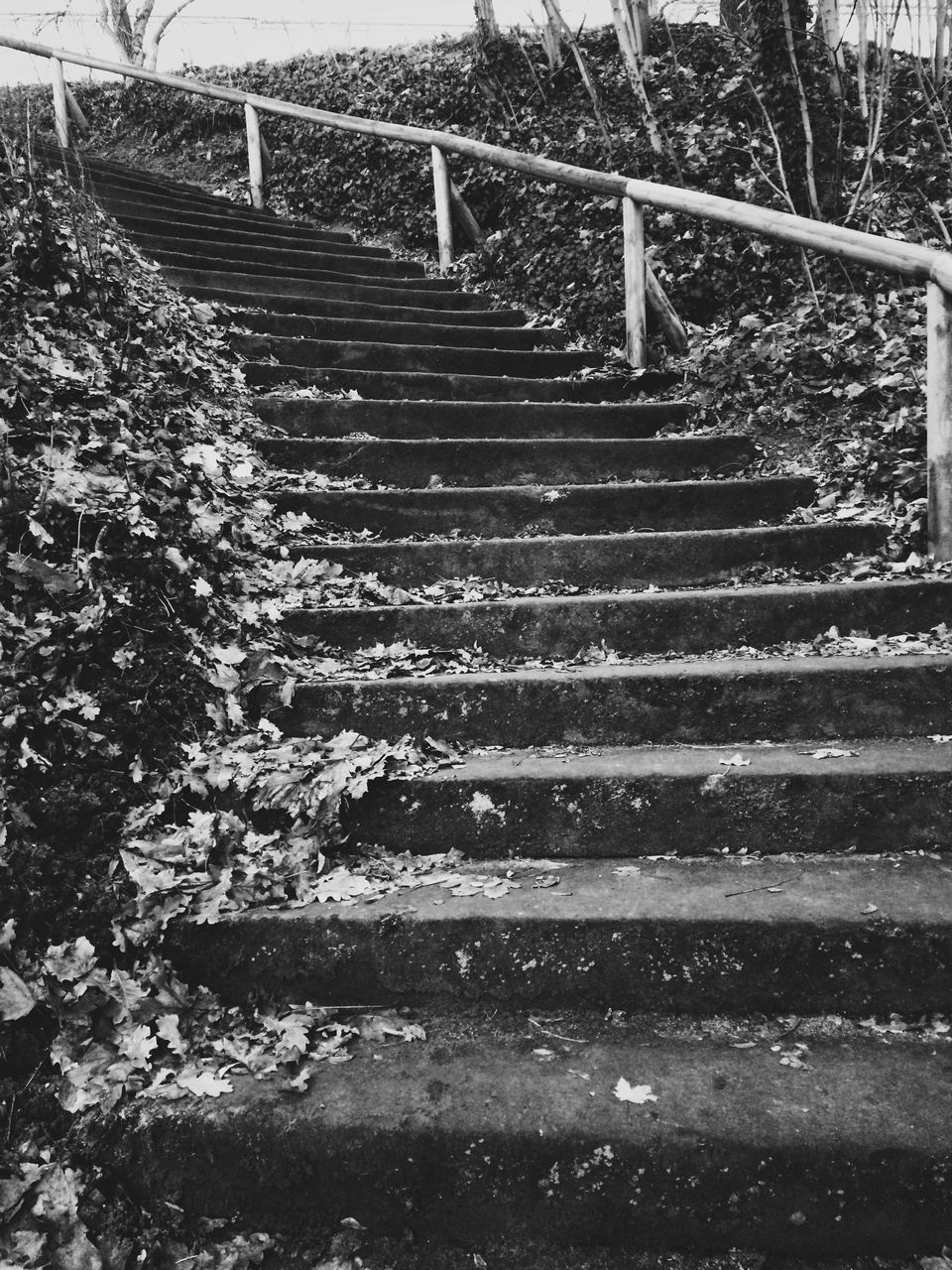 steps, steps and staircases, staircase, stairs, railing, stairway, hand rail, day, no people, outdoors, nature