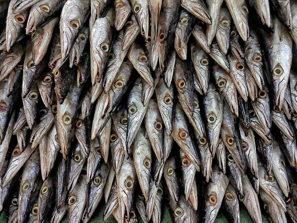 Backgrounds Pattern Abundance Textured  No People EyeEmNewHere EyeEm Selects Fishes Eyes Watching You Eyes SEAFOOD🐡 Animal Themes Food And Drink