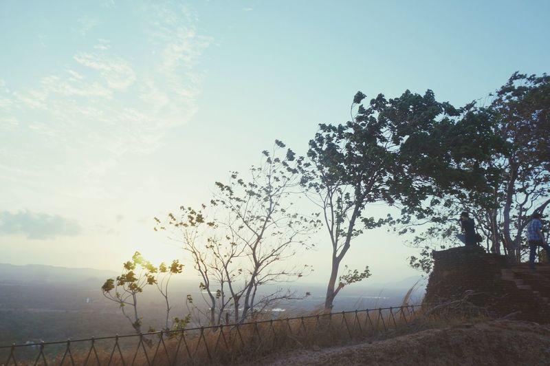 SriLanka Tree And Sky