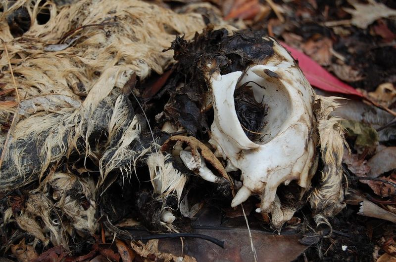 Bones Carcass Cat Close-up Dead Dead Animal Dead Cat Decay Decaying Rotting