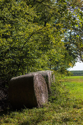 Beauty In Nature Day Field Grass Green Color Growth Hay Bale Nature No People Outdoors Tree