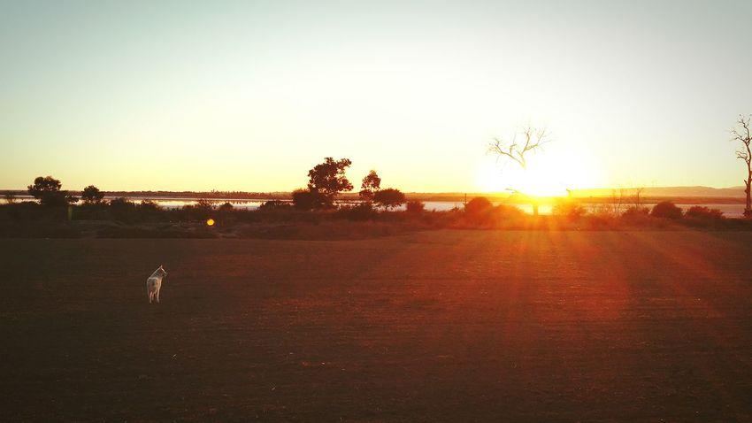 Sunset Landscape Enjoying Life Dog