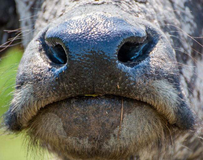 I nose you.