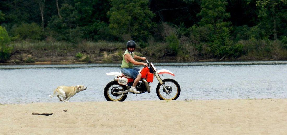 Dog chasing man riding motorcycle at beach